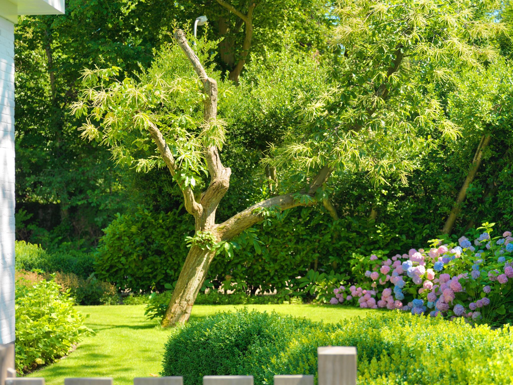 Geerlings tuinen Modern romantische tuin